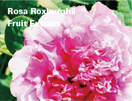 Rosa Roxburghii Fruit Extract
